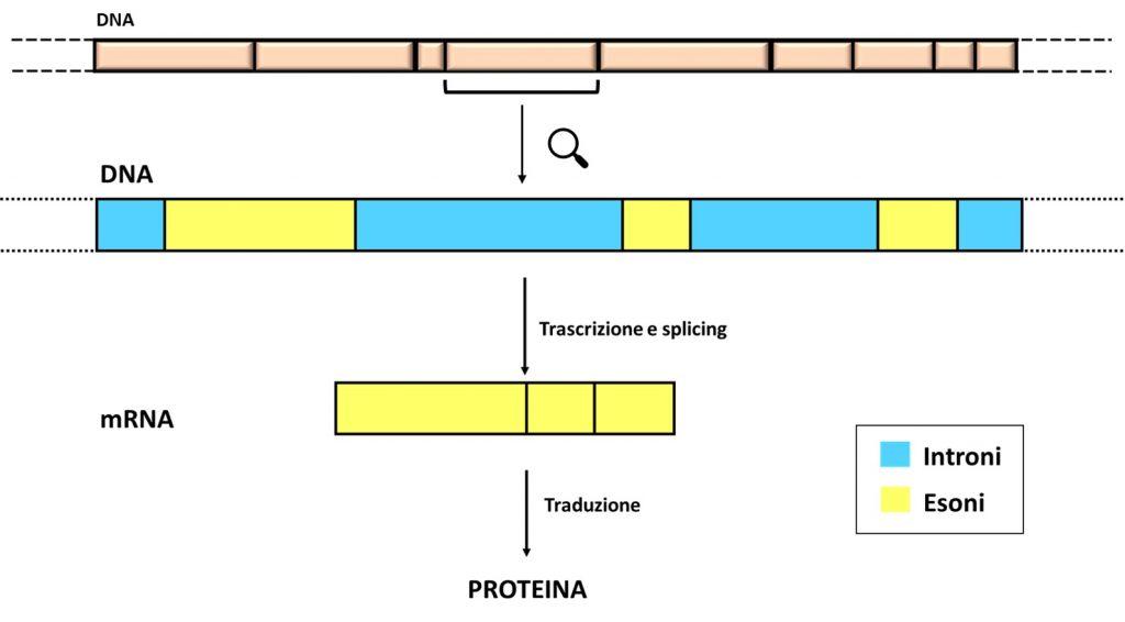 gene DNA